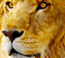 أبل تصدر النسخة الذهبية من ماك OS X Lion للمطورين